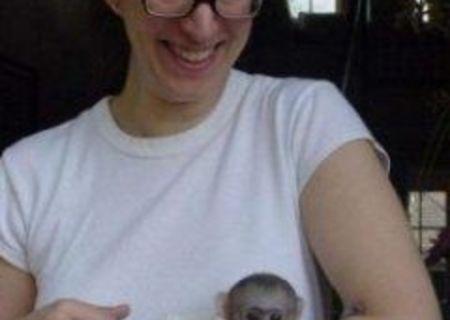 CAPUCHIN Maimuțe Disponibile Pentru Adopție