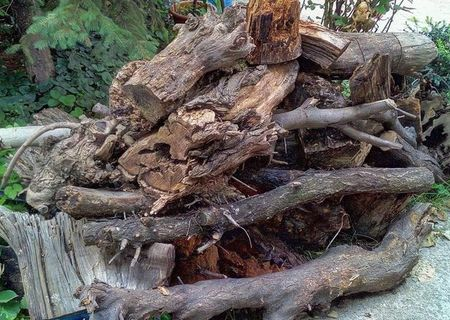 Donez lemne provenite din pomi taiati din curte