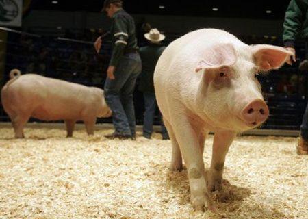 Porc Pentru Craciun