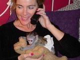 adorabil maimuțe capucin mai tineri pentru rehomind (saracinovaness@gmail.com)