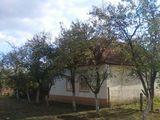 Biled Casa cu gradina 1000 mp
