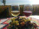 Crama Toaca Cosmin - vinuri albe si rosii