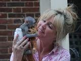 Două adorabile mici masculi și femei de maimuțe capucin copil pentru adoptare  roselinepuppies@gmail.com