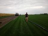 Gazon rulou sport 22 de lei metru pătrat. Transport și montaj inclus în preț
