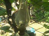 LAmpa gaz/petrol