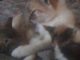 ofer pisicuti