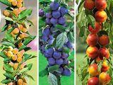 Pomi fructiferi columnari si vita de vie