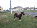ponei de vanzare