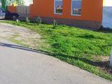 vand casa cu gradina in Lovrin