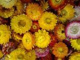 Vand Flori de paie, 10 bani bucata, Sibiu